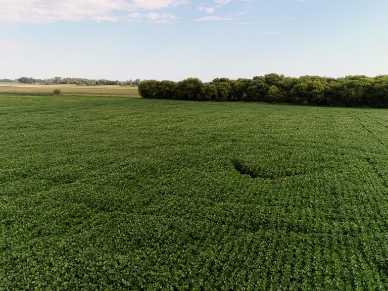 160+/- Acres of Cropland in Marshall Co. SD