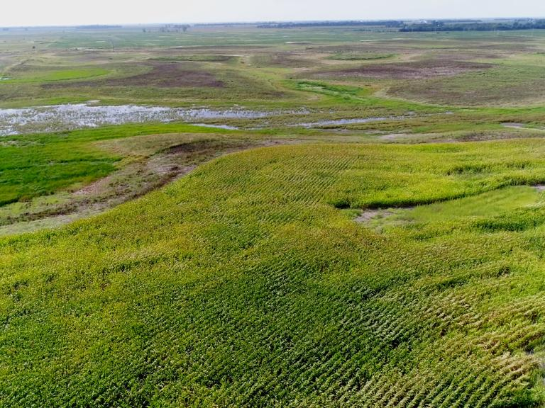 153+/- Acres of Crop & Grass in Sanborn County, SD