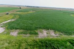 80+/- Acres of Crop & Grass in Sanborn County, SD - Sanborn County