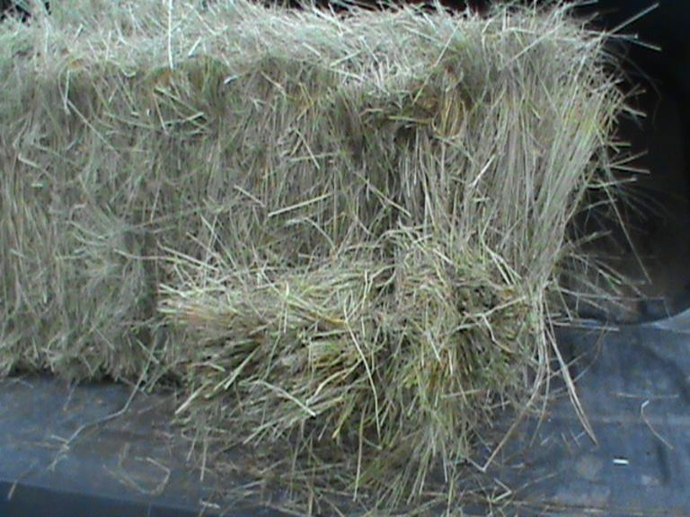 100 Teff Grass - Small Squares - Bidding is $/Bale - Online Auction