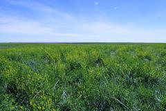 480+/- Acres in Buffalo Co, SD - Buffalo County