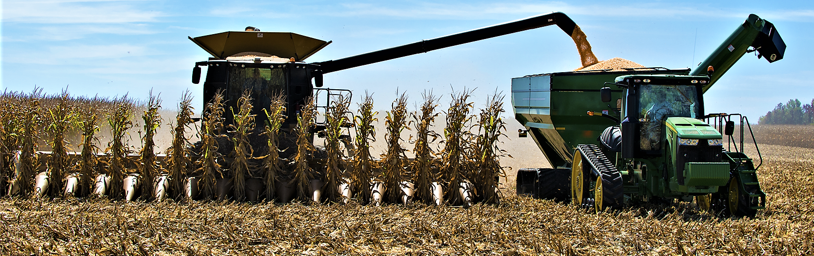Corn Harvest Cropped.png