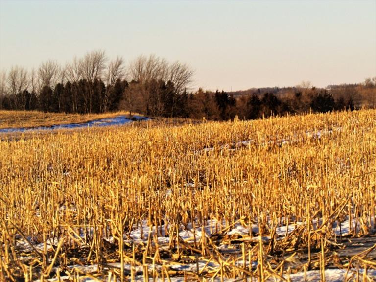 123.6+/- Acres in Lincoln Co, MN