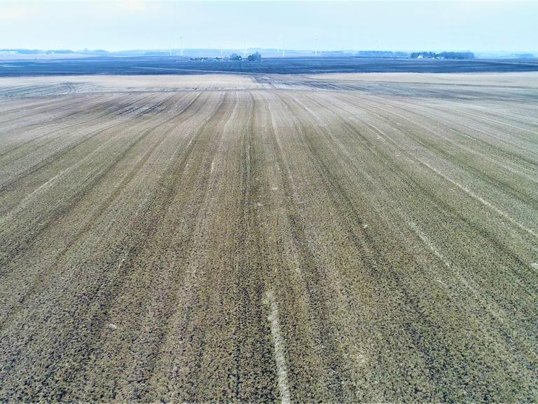 80+/- Acres of Crop Land in Murray Co, MN