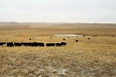 4,655+/- Acre Ranch in Meade Co, SD