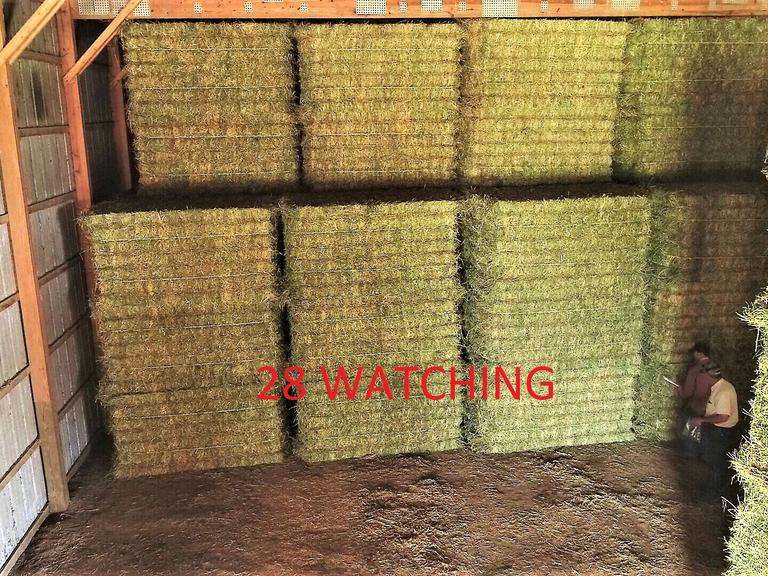 26 Large Alfalfa Grass Dairy-Grade Squares - BIDDING IS $/TON - Online Auction