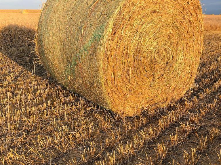 34 Large Round Rye Straw Bales - BIDDING IS $/BALE - Online Auction
