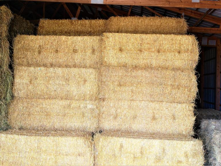 47 Large Square Straw Bales - BIDDING IS $/BALE - Online Auction