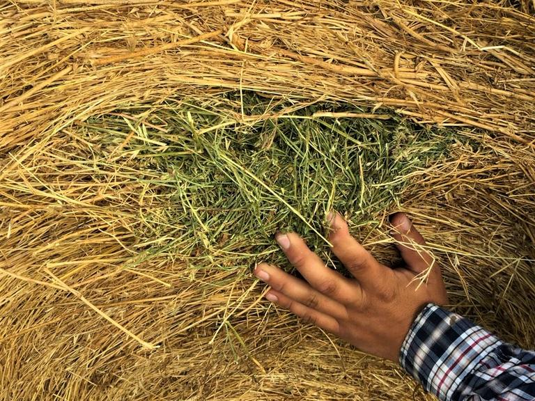 Alfalfa Grass Hay Mix - BIDDING IS $/TON - Online Auction