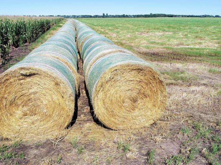 Bidder's Choice 14-34 Large Teff Grass Rounds - BIDDING IS $/BALE - Online Auction