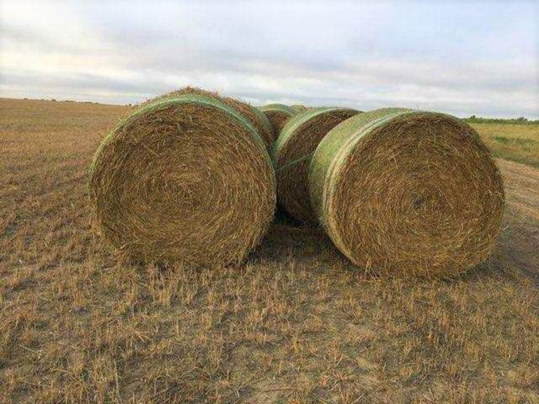 34 Beardless Wheat Hay Bales - Large Rounds - BIDDING IS $/TON - Online Auction