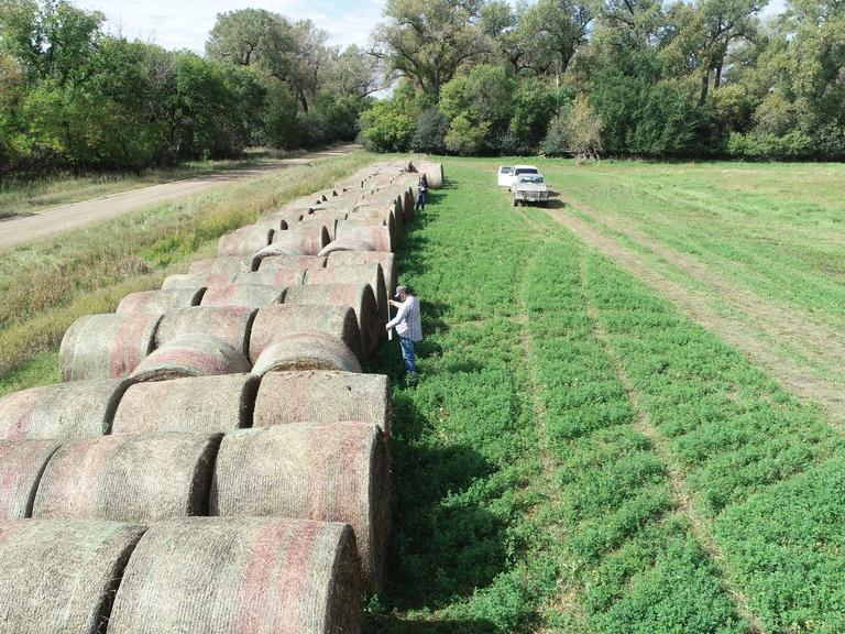 34 Straight Alfalfa Round Bales - 3rd Cutting Quality Feed - BIDDING IS $/TON - Online Auction