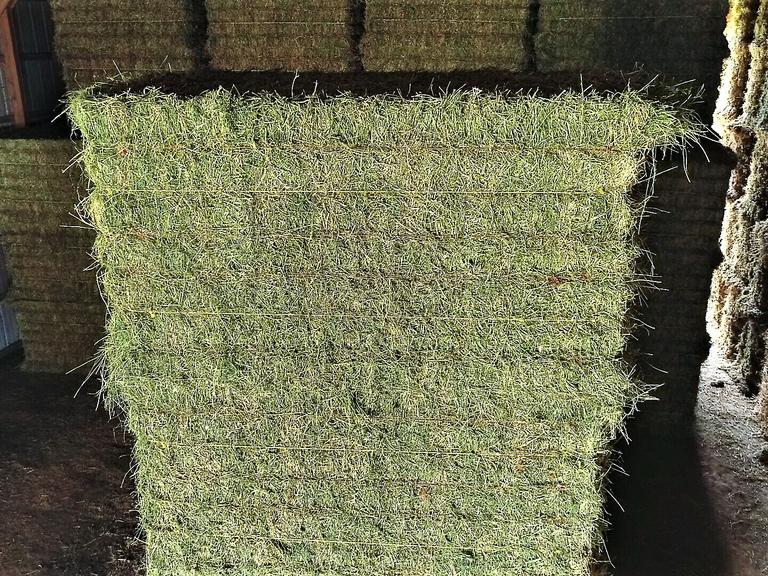 Alfalfa with Minimal Grass - Large Squares - BIDDING IS $/TON - Online Auction
