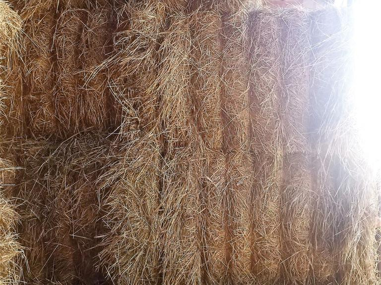 40+/- Large Grass Square Bales - BIDDING IS $/TON - Online Auction