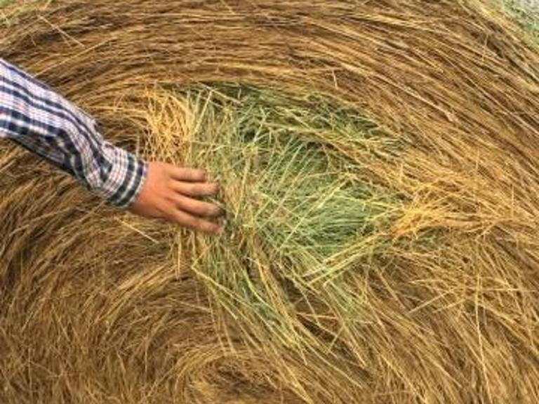 Alfalfa - Grass Mix - Large Rounds - BIDDING IS $/TON - Online Auction