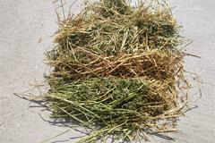 Nearly All Alfalfa - Heifer Hay - Big Squares - BIDDING IS $/TON - Online Auction
