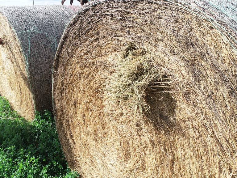 Bidder's Choice 1-4 Loads of 34 3rd Cutting Alfalfa Round Bales - BIDDING IS $/TON - Online Auction