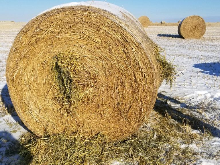 Bidder's Choice 1-3 Loads - 34 Cow Chew Round Bales - Bidding is $/Bale - Online Auction