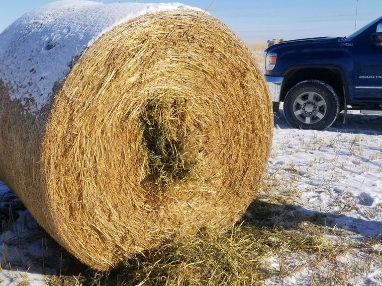 Bidder's Choice 1-3 Loads - 34 German Millet Round Bales - Bidding is $/Bale - Online Auction