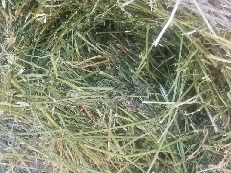 Bidder's Choice 1-2.5 Loads - 2nd & 3rd Cutting Alfalfa Rounds - BIDDING IS $/TON - Online Auction