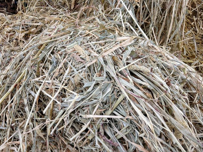 Cover Crop Haylage - Net Wrapped & Plastic Wrapped - 40 Bales - BIDDING IS $/BALE - Online Auction