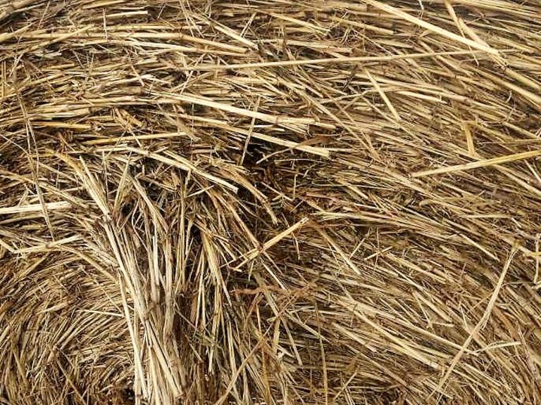 Bidder's Choice 1-2 Loads of Sudan Grass - Bidding is $/Bale - Online Auction