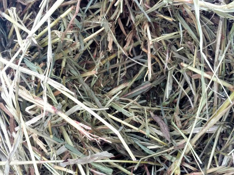 30 Pieper Sudan Grass Bales - Bidding is $/Bale - Online Auction